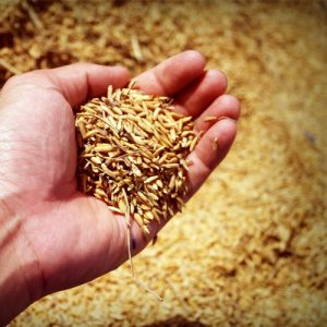 Flours, Rice, Rice Cakes & Vermicelli